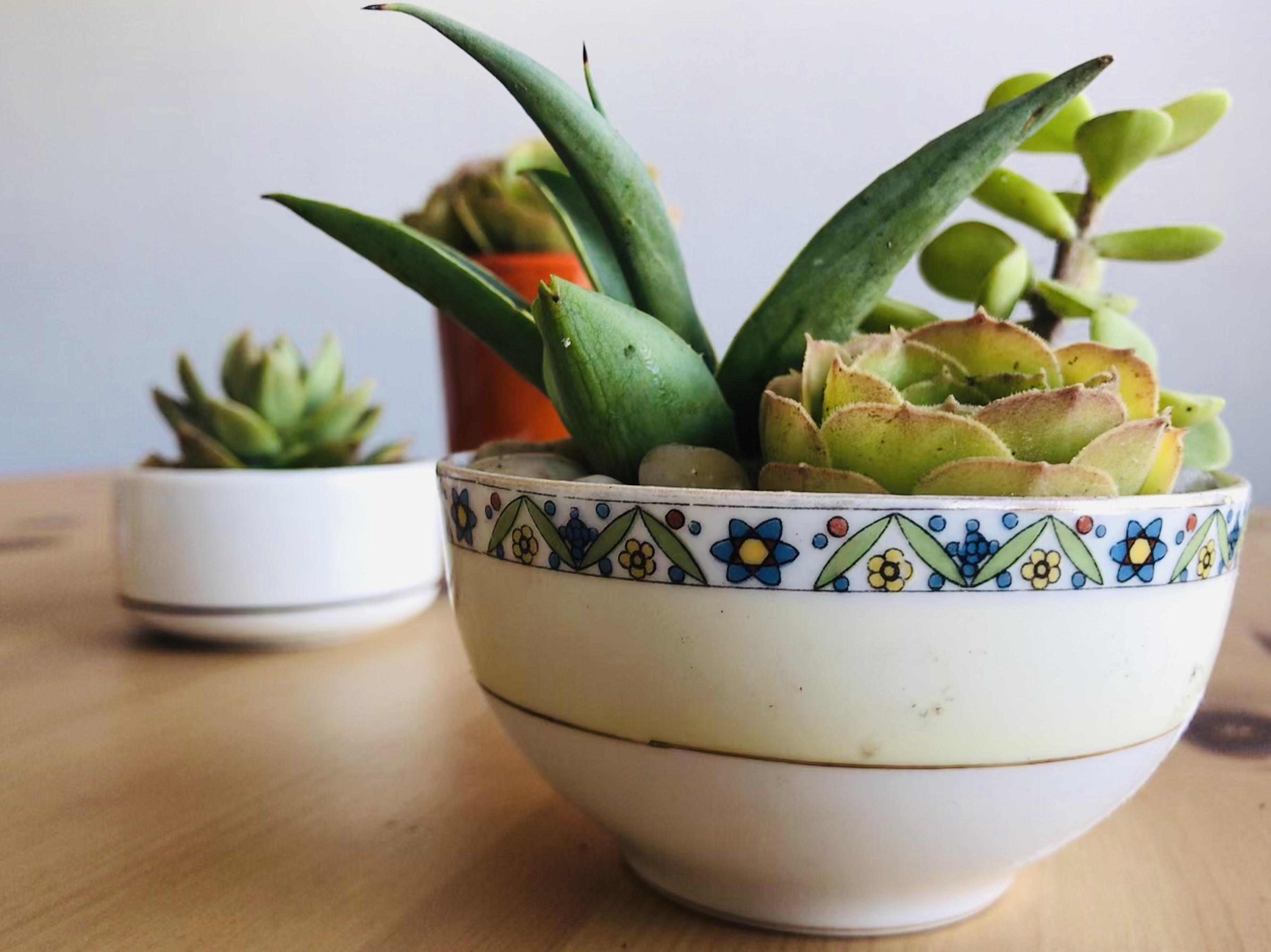 Succulents in a tea pot
